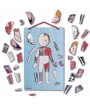 Магнитная игра тело человека для детей, Janod