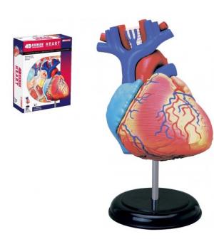 """Анатомическая модель для детей, """"Сердце"""", (4D пазл)"""