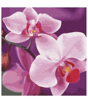 """Картина по номерам """"Волшебная орхидея"""" ★★★ КНО3105 30х30 см"""
