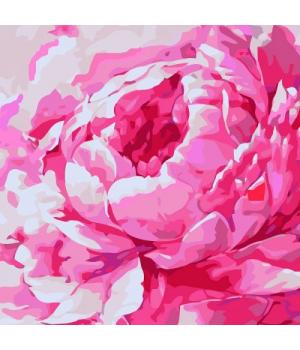 "Картина по номерам ""Розовый пион 2"" ★★★★ КНО2949 30х30 см"
