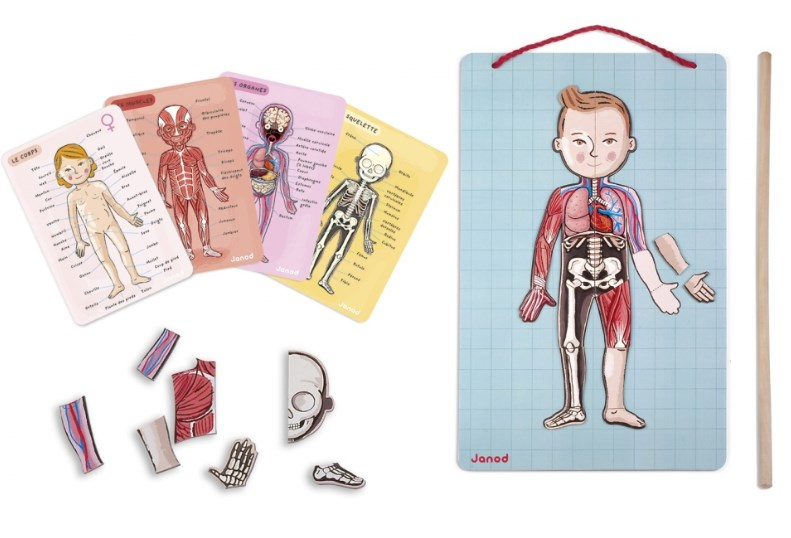 дидактична гра частини тіла людини купити